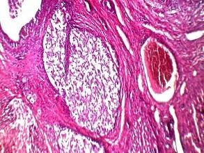 组织染色-免疫学服务